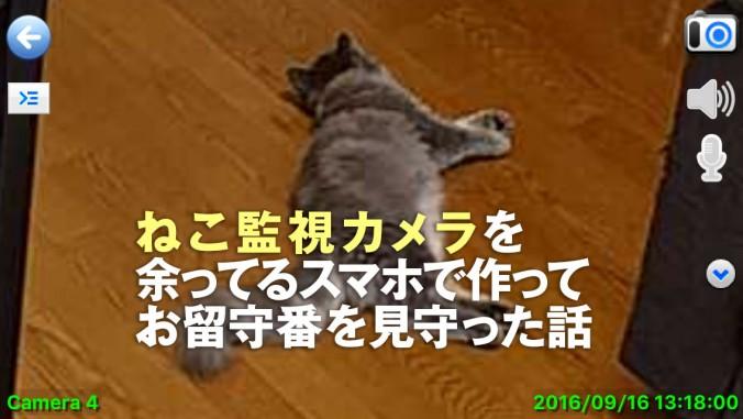cat_remote_camera01