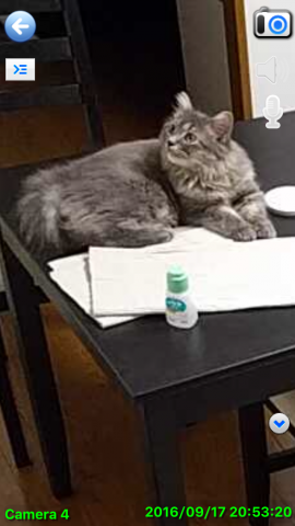 cat_remote_camera04